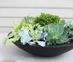 The Uccello bowl by Pietro Stoneware, is the perfect table top planter suitable for planting succulents or add an ethanol fire burner for maximum impact. Please Note: Surcharge applies to pure white and black smooth coloured pieces. Succulent Bowls, Succulent Centerpieces, Succulent Arrangements, Black Planters, Outdoor Planters, Outdoor Landscaping, Succulents In Containers, Planting Succulents, Planter Table