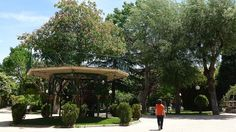 Árbol de la Música y otros árboles - Dehesa de Soria