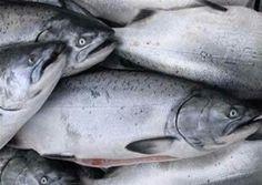 Somon Balığının Özellikleri
