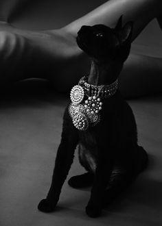 Black Bejeweled Cat
