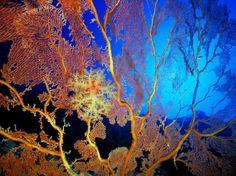 Super wall paper desktop sea world ideas Coral Wallpaper, Animal Wallpaper, Underwater Animals, Underwater World, Deep Sea Animals, Wallpaper Collection, Coral Art, Coral Orange, Fishing World