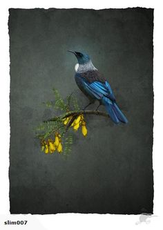 Tui art print, limited edition, $260 / bird / New Zealand / Kowhai / blue / yellow
