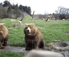 Gif gracioso de oso saludando