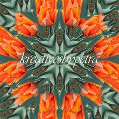 Mandala Kaleidoskop ''Tulpe orange'' Kreatives by Petra #mandala 'kaleidoskop #spiegelung #reflektion #reflection #innereruhe #inspiration #tulpe #tulip #orange #blumen #flowers #blüten #blossom #frühling #spring #sommer #summer #home #deko #dekoration #plakat #poster #leinwand #canvas Petra, Inspiration, Mandalas, Orange Flowers, Home Decoration, Tulips, Mosaics, Poster, Biblical Inspiration