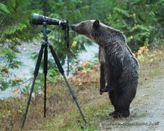 PetsLady's Pick: Funny Peeping Bear Of The Day...see more at PetsLady.com -The FUN site for Animal Lovers