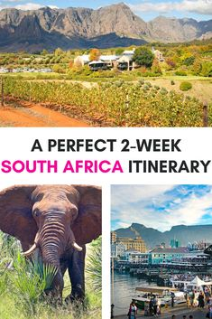 Are you planning your first trip to Africa, to South Africa? This 2-Week South Africa itinerary will help you plan the perfect trip to South Africa, covering a little bit of everything this fantastic country has to offer. Visit Cape Town, go for a wine tasting in Stellenbosch, see the penguins in Cape Peninsula, go whale watching in Hermanus and much more.  | South Africa travel | South Africa safari | South Africa trip itinerary | South Africa road trip | Trip to South africa South Africa Safari, Hiking Routes, Africa Travel, Places To See, Travel Inspiration, Travel Photography, Around The Worlds, Adventure, Travel Tips