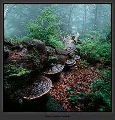 Mushrooms, Czech Republic - Ladislav Kamarad - www. Mushroom Pictures, Peace Of Mind, Czech Republic, Fungi, Stuffed Mushrooms, Outdoor Decor, Nature, Plants, Rain