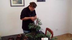 Drótozás, lassú folyamat, de ha minden ágat bedrótozol, akkor sikered lehet, mert jól lehet beállítani a fát.