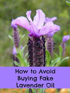 How to avoid buying fake lavender oil, often make with another flower called lavandin. This less-expensive oil doesn't smell as sweet as real lavender, leaving open the possibility of doctoring it with chemicals.