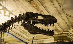 Los 4 dinosaurios más antiguos que se conocen