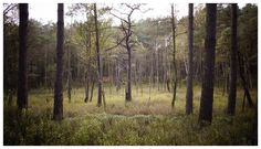 Forrest In The Making - Furlbachtal, Germany, Autumn 2014...