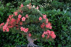 El arte de los bonsáis ¿Quieres verlo?