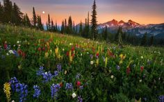 горы закат - Поиск в Google