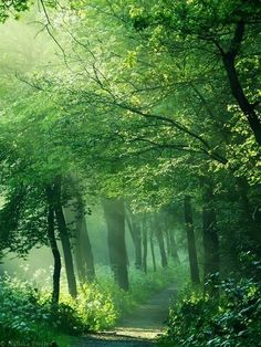 spring green path, photo by nelleke pieters