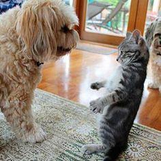 Soy grande y fuerte como tu. www.petclic.es