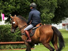 Olympic Equestrian Event London 30 July 2012 - Russell Marsh - Picasa Web Albums