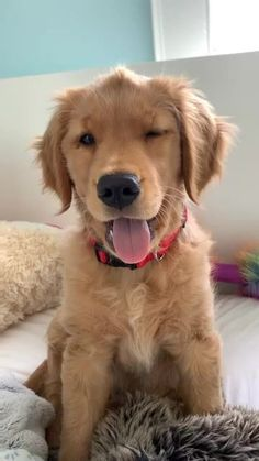 Stunning hand crafted golden retriever accessories and jewelery available at Paws Passion Shop! Represent your golden retriever pup with our merchandise! Super Cute Puppies, Cute Baby Dogs, Cute Little Puppies, Cute Dogs And Puppies, Cute Little Animals, Cute Funny Animals, Doggies, Dog Baby, Corgi Puppies