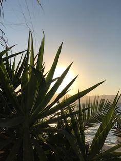 Die schönsten Restaurants mit Meerblick auf Mallorca - COOKIES FOR MY SOUL Restaurants, Places, Environment, Spain, Island, Majorca, Nature, Nice Asses, Restaurant