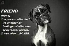 For definition of Friend see Dog Boxer Dog Puppy, Boxer Breed, Boxer Bulldog, Boxer Mom, Boxer And Baby, Brindle Boxer, I Love Dogs, Puppy Love, Cute Dogs
