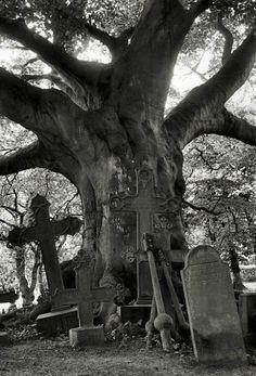 Halloween 2013 graves