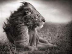 Yes I am king!!!