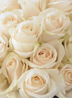 Vendela Ivory roses for the bridal bouquet Ivory Roses, Cream Roses, White Roses, White Flowers, Blush Roses, Beautiful Roses, Fresh Flowers, Beautiful Flowers, Champagne
