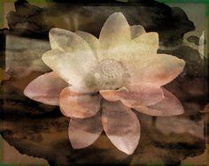 Lily watercolor by Deb Dresler Strokeofart.com