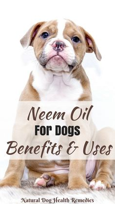 Benefits of neem for dogs are numerous. The leaves can be used to boost the immune system of dogs in general, and to repel intestinal parasites. Neem oil can also be used to treat skin problems, repel fleas, mosquitoes, and ticks. Coconut Oil For Dogs, Coconut Oil Uses, Puppy Care, Dog Care, Mites On Dogs, Hypoallergenic Dog Food, Essential Oils Dogs, Dog Separation Anxiety, Oils For Dogs