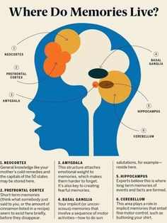 Brain Anatomy, Medical Anatomy, Anatomy And Physiology, Human Memory, Brain Memory, Trauma, Brain Facts, Facts About The Brain, Brain Science