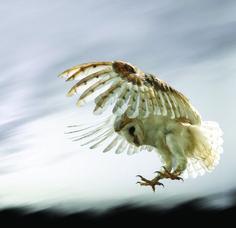 owls_sound_photo.jpg 2,025×1,961 pixels