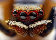 Jumping Spider. ~ OK. Those are two words I'd rather not hear (or see) so close together.