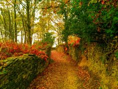#Galicia #Sarria-Portomarín #Caminodesantiago #viaje #Naturaleza #Lugo #España