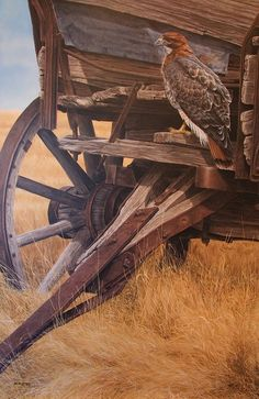 DARREN HALEY Original Paintings and Giclee Canvas and Giclee Paper and Limited edition print collection Wildlife Paintings, Animal Paintings, Painting Process, Painting & Drawing, Raptor Bird Of Prey, Art History Major, Scratchboard Art, Le Far West, Pencil Portrait