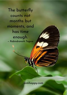 20 Beautiful Nature Quotes to Awaken a Peaceful Inside Sassy Quotes, Life Quotes Love, Me Quotes, Nature Quotes, Spiritual Quotes, Positive Quotes, Citation Nature, Diana Cooper, Butterfly Quotes