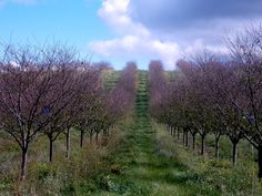 Fall orchard, photo by Michelle Kunze