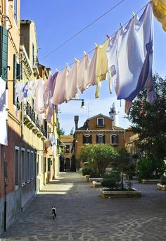 Murano cat and clothes on the line