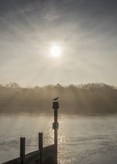 Early Bird by Nigel Lomas on 500px