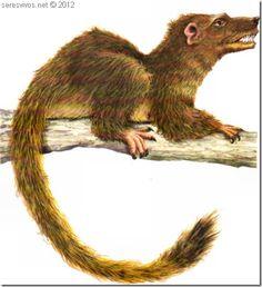 Hace 65 millones de años cae un meteorito en Yucatán. Provocando una nube de cenizas que envolvió la Tierra lo suficiente para acabar con la vida vegetal de la vida y provocando una segunda extinción de los dinosaurios. Los mamíferos sobrevivieron gracias a los insectos. Desarrollamos una cola peluda y 10 millones de años después subimos a los árboles, convirtiéndonos en los primero primates.