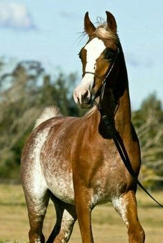 Pretty colored horse with unusual markings.