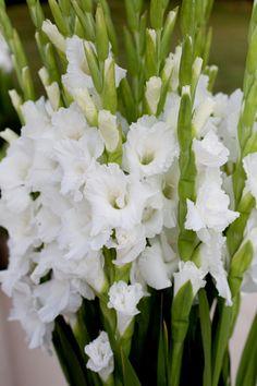Grow Gladioli - enough to sell at a Market!