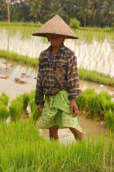 www.villabuddha.com  Bali  Balinese Rice Farmer