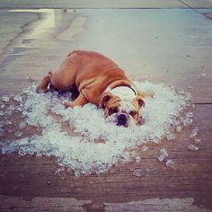 Votre solution pour vous rafraîchir c'est quoi? #canicule #fraicheur #summer #funny
