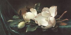 Magnolia Oil Paintings | ... Heade - Martin Johnson Heade Magnolia Blossoms on Blue Velvet Painting