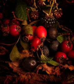 """""""Hedgerow fruits"""" by Gazart on Red Bubble"""