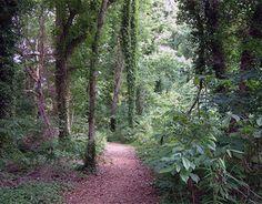 Walking through the woods. #kimberlingray