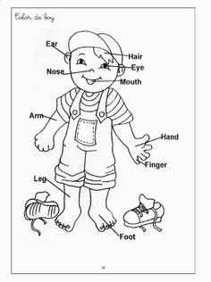 human body coloring pages for kids c0lor 189062 body systems - Human Body Coloring Book
