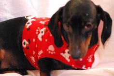 I Woof U Harness Vest by DownUnderDogDesigns on Etsy, $35.00