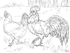 Hen and Rooster coloring page | SuperColoring.com