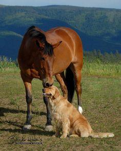 Hermosa fotografia caballo y perro