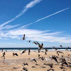#portugal #portugal #lisboa #lisbon #costadecaparica #beach #atlanticocean  #ocean #birds #birdspower